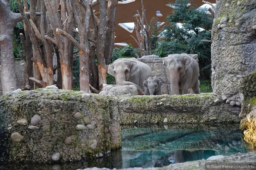 Дубай сафари зоопарк: цены 2021, режим работы, сайт, адрес на карте, как добраться – туристер.ру
