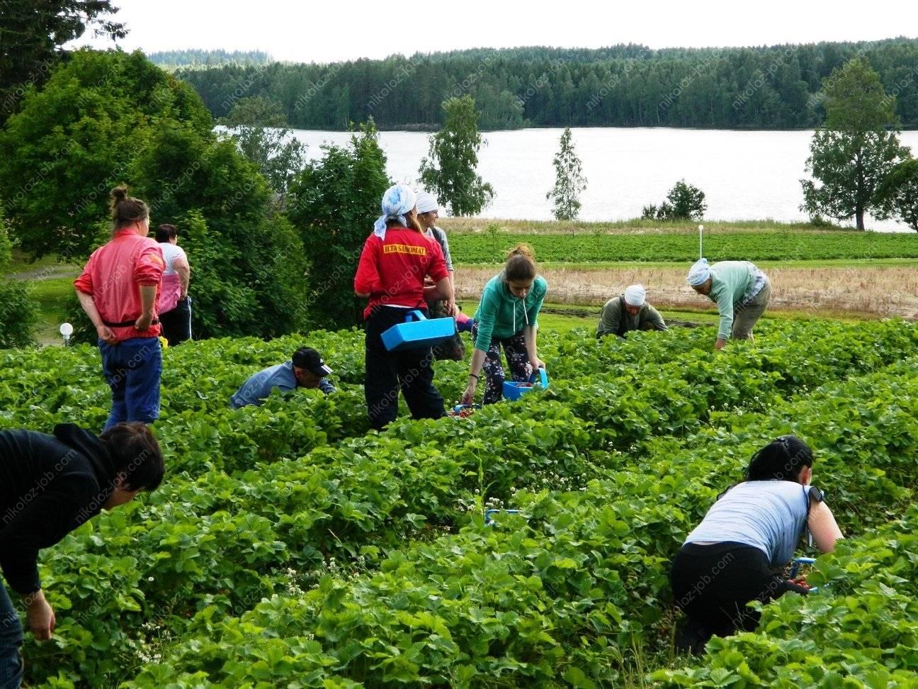 Работа в финляндии вакансии и резюме