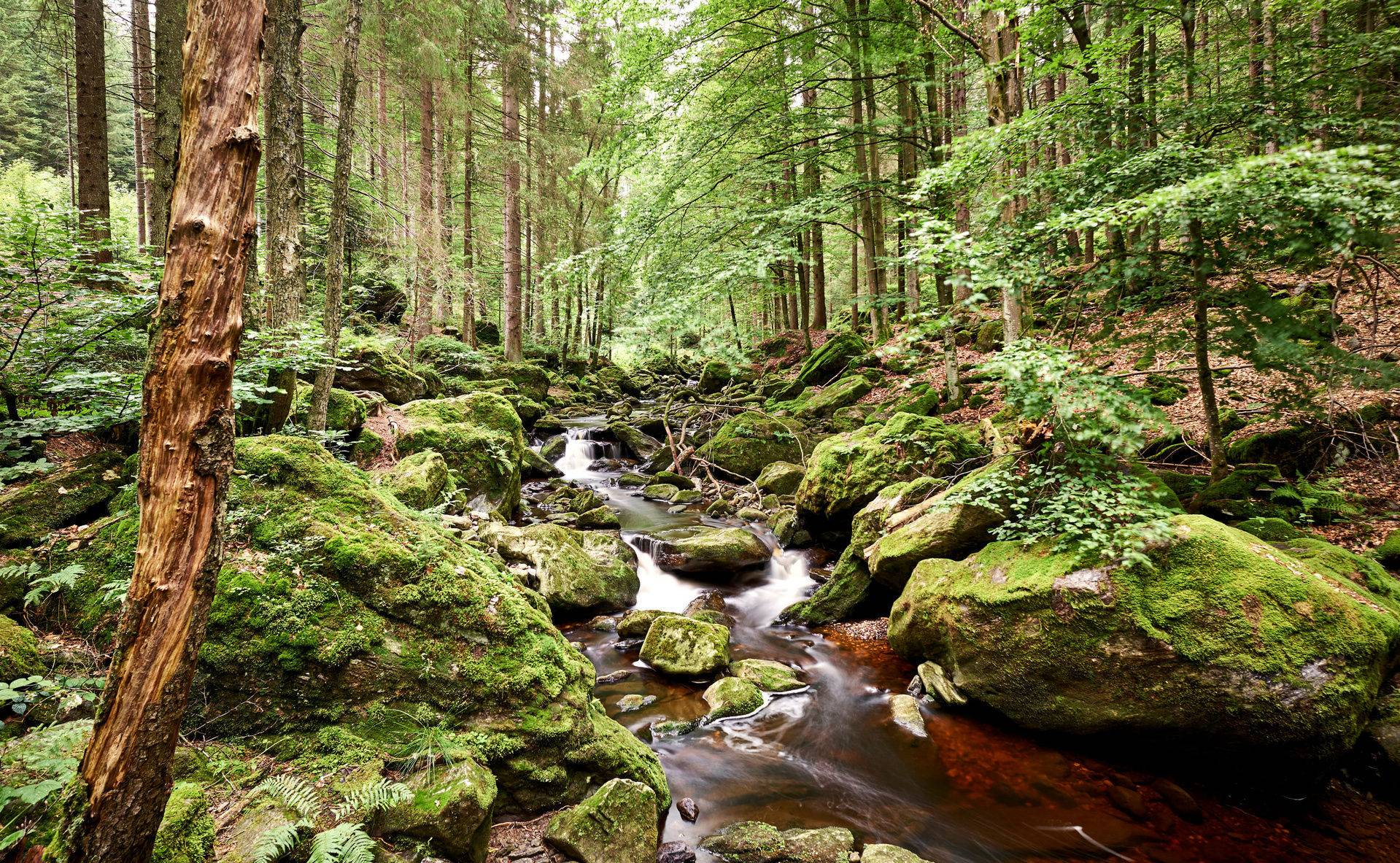 Баварский лес: германия, достопримечательности, отзывы, лучшее в 2018