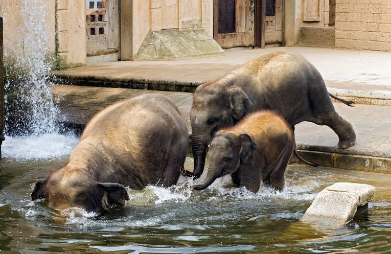 10 самых примечательных зоопарков мира - мой отпуск - медиаплатформа миртесен