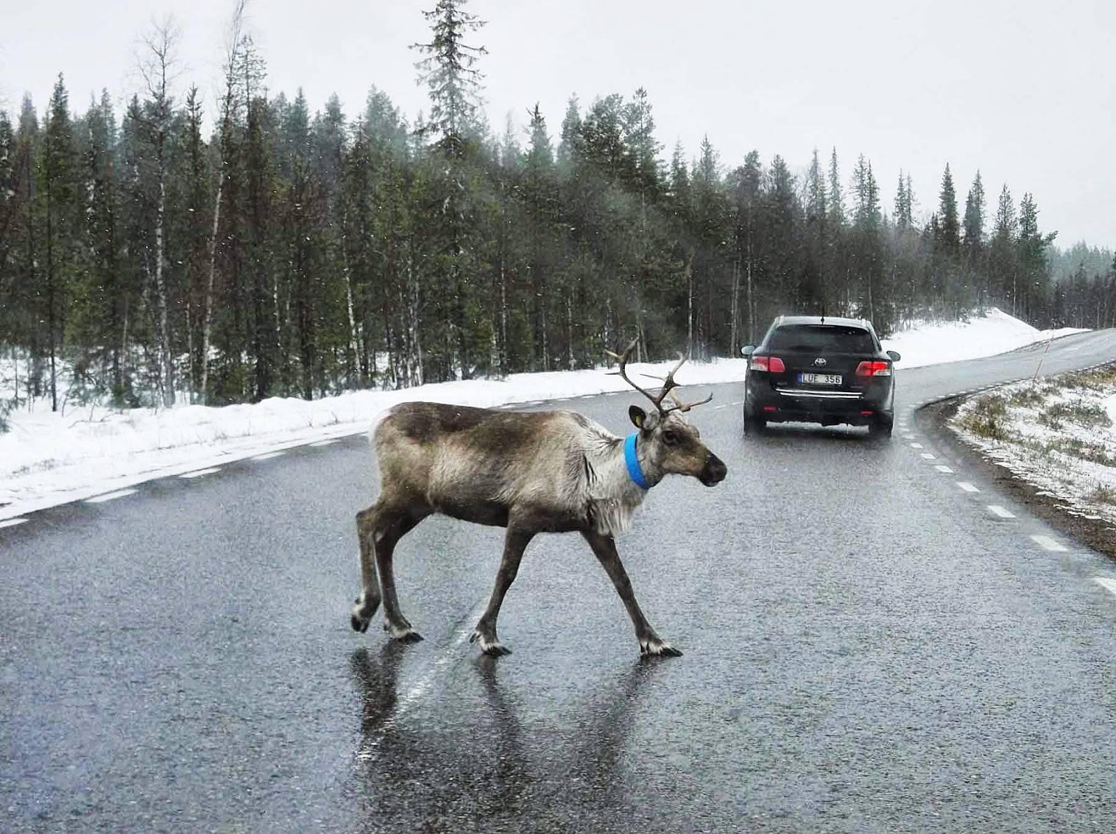 Все о том как поехать в финляндию на машине плюс правила пдд