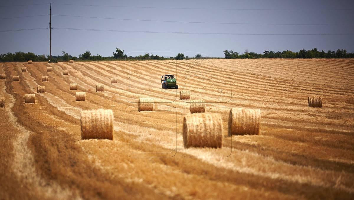Как найти работу в польше в сельском хозяйстве