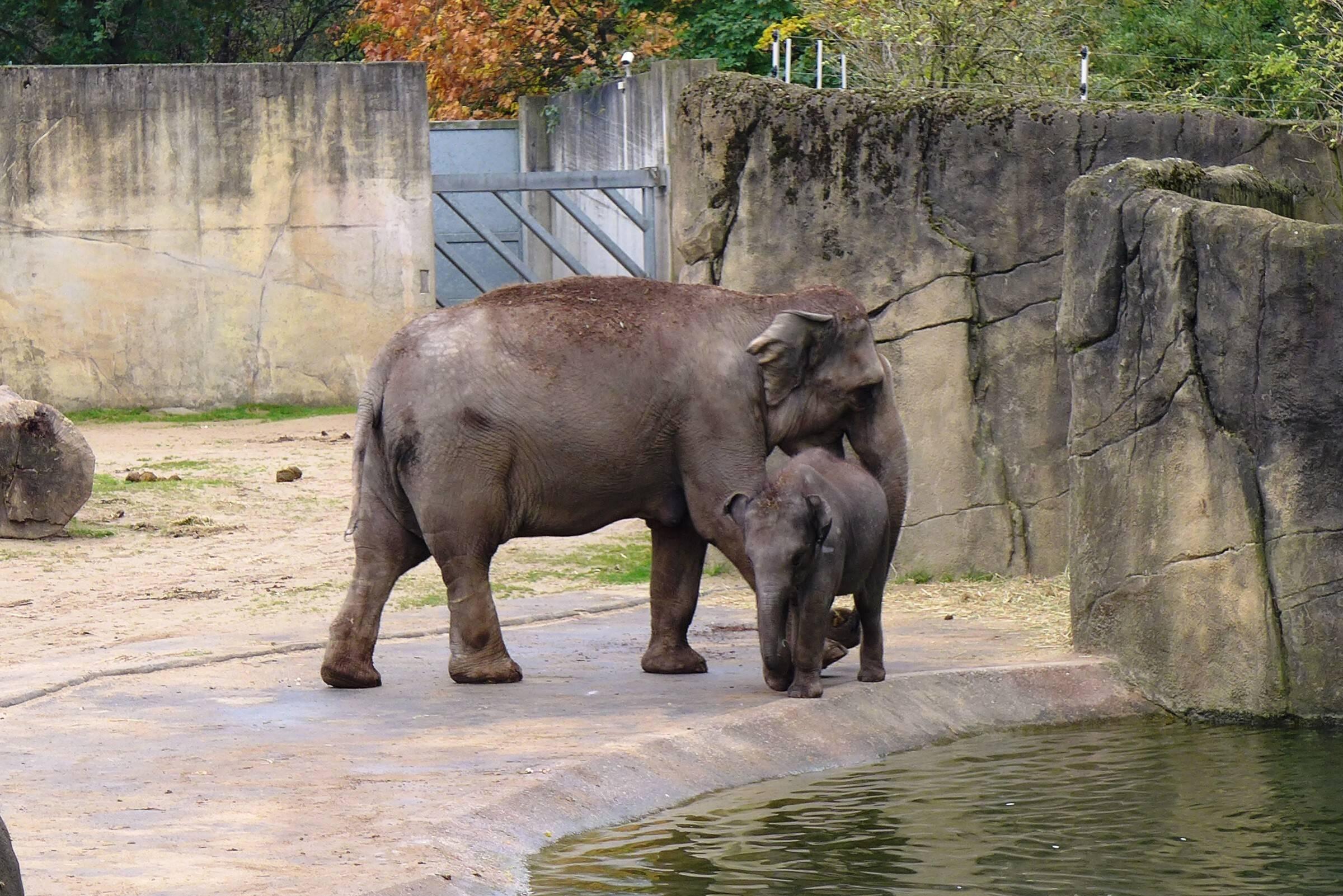 Алматинский зоопарк 2021, алматы. цены, режим работы, официальный сайт, как добраться, фото, видео, отели – туристер.ру