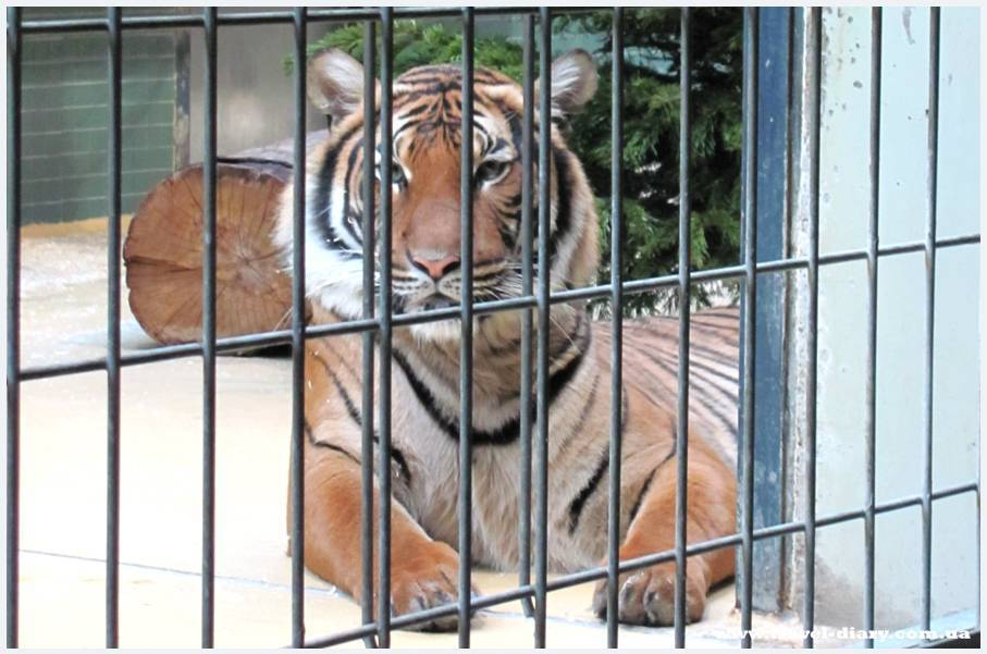 Что предлагает туристам Берлинский зоопарк