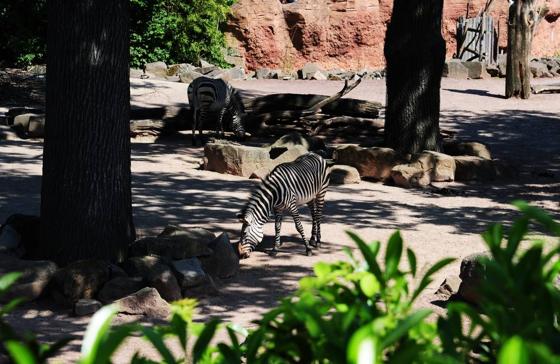Берлинский зоопарк и аквариум – большая семья для тысяч животных и обитателей водного мира. фото