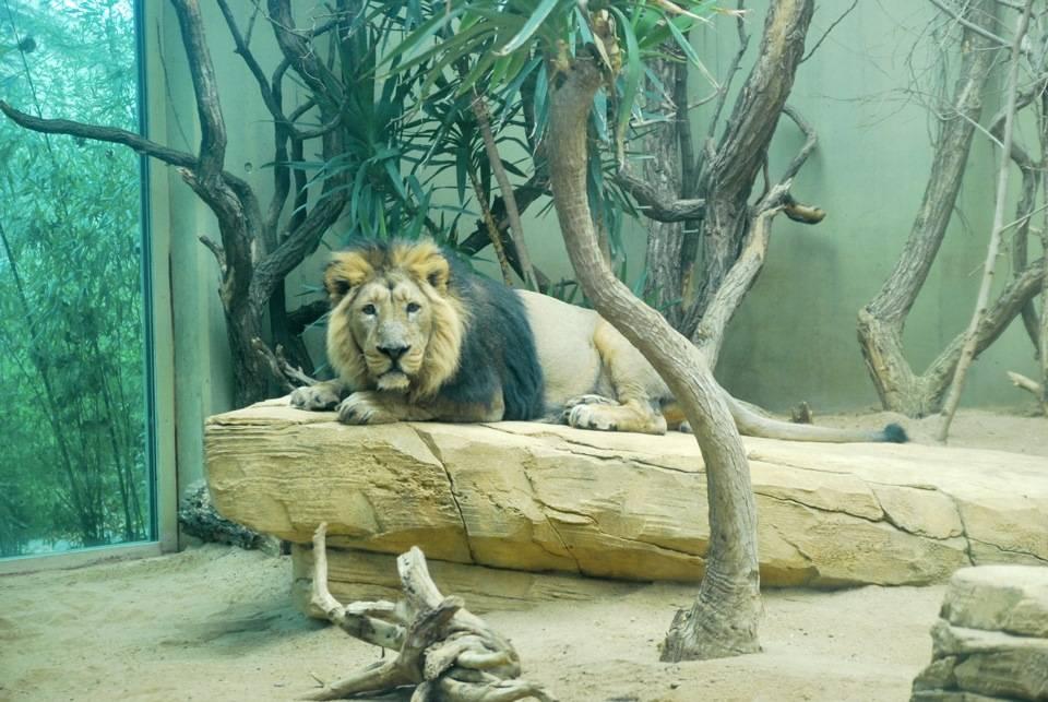Франкфуртский зоологический сад - gaz.wiki