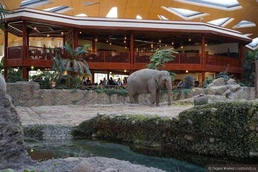 Берлинский зоопарк - панда и 15000 других животных