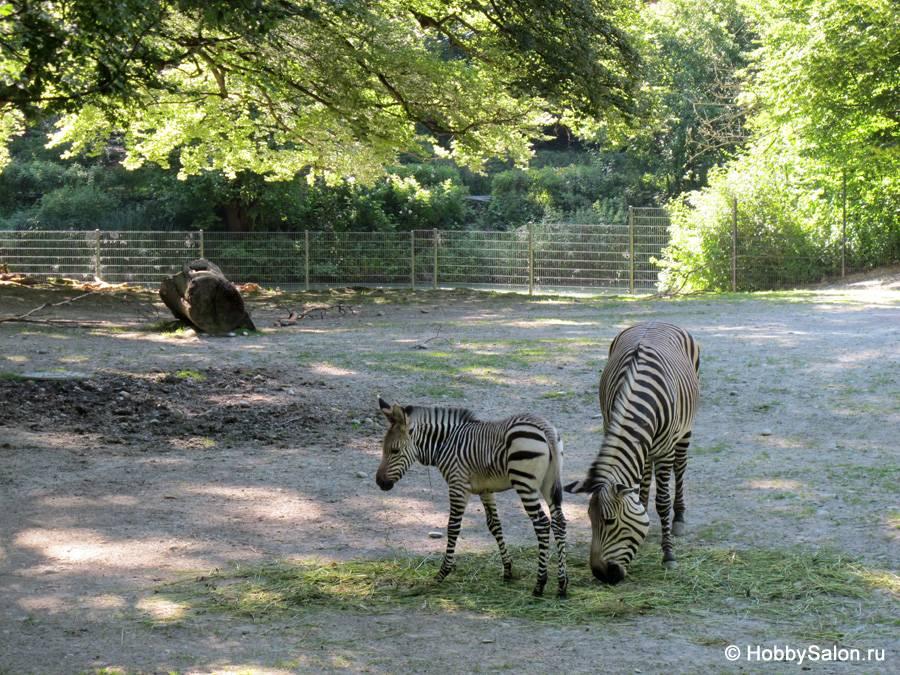 Мюнхенский зоопарк — животные со всего мира