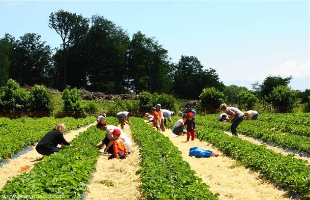 Поиск работы и трудоустройство в польше в сельском хозяйстве