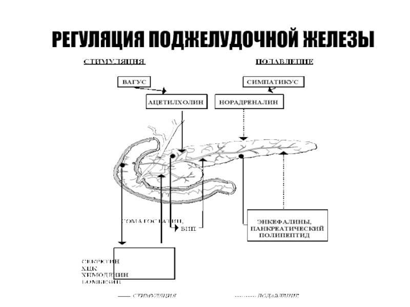 Пересадка бета клеток поджелудочной железы в германии