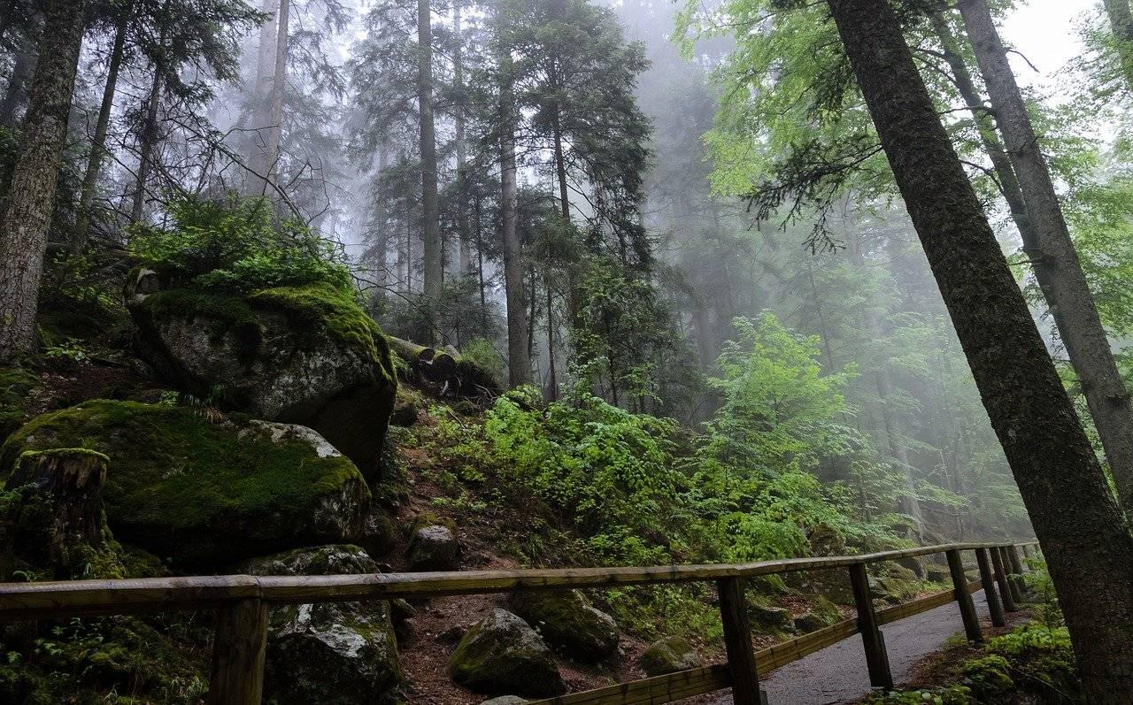Шварцвальд (schwarzwald) в германии: фото, описание чёрного леса, карта, что посмотреть