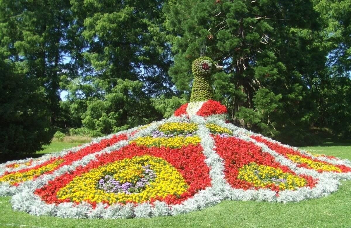 Германия - страна цветов. национальный цветок германии и пара слов об острове майнау