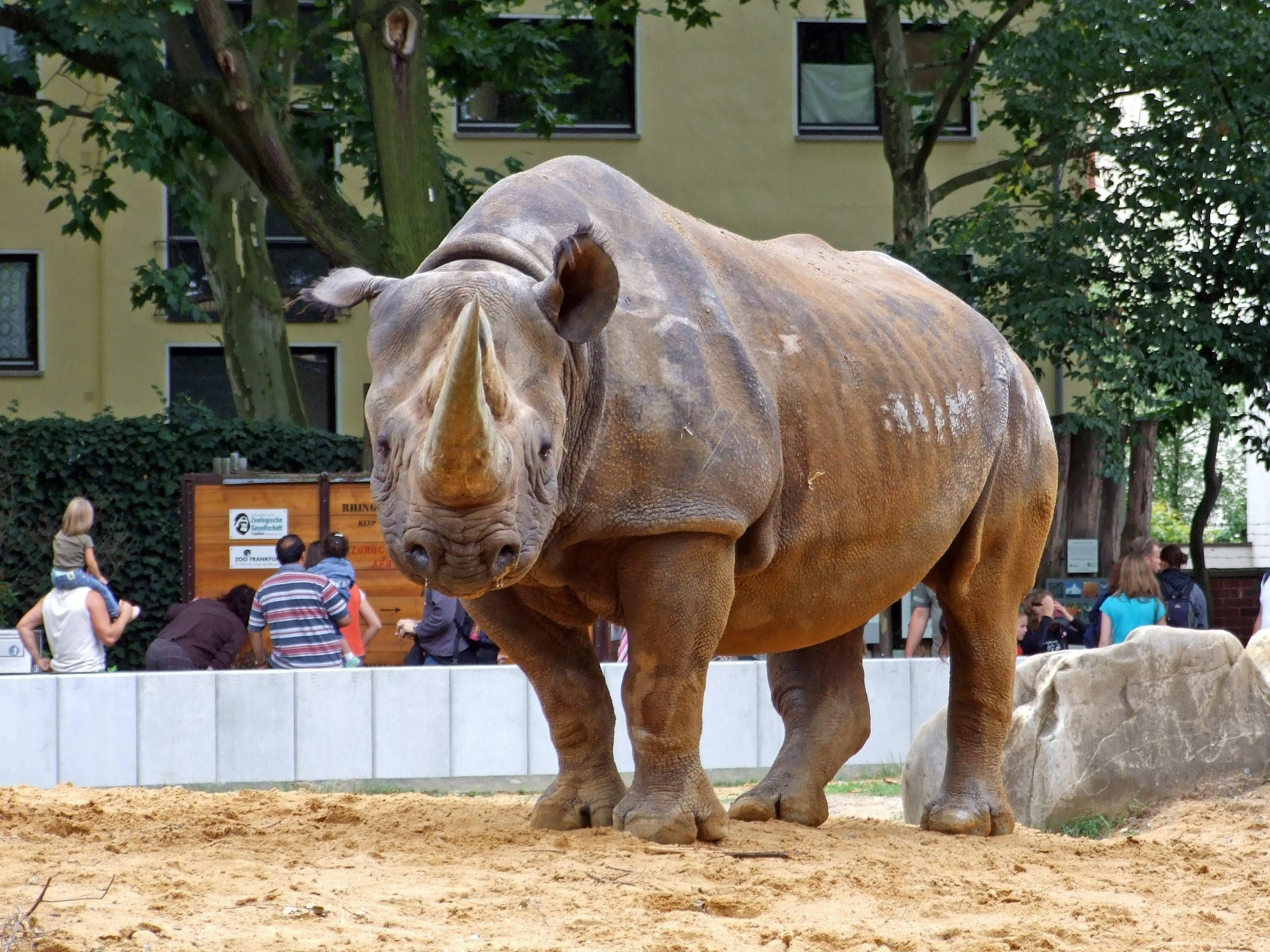 Франкфуртский зоопарк