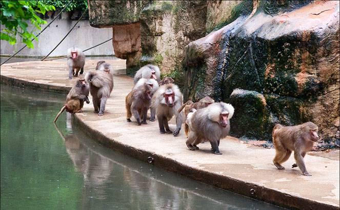 Кёльнский зоопарк: животные рядом с людьми