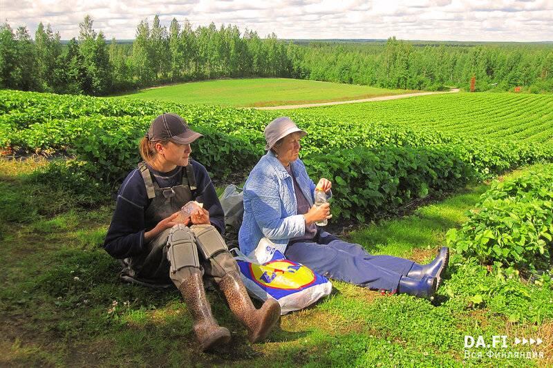 Работа в финляндии: особенности трудоустройства| вакансии
