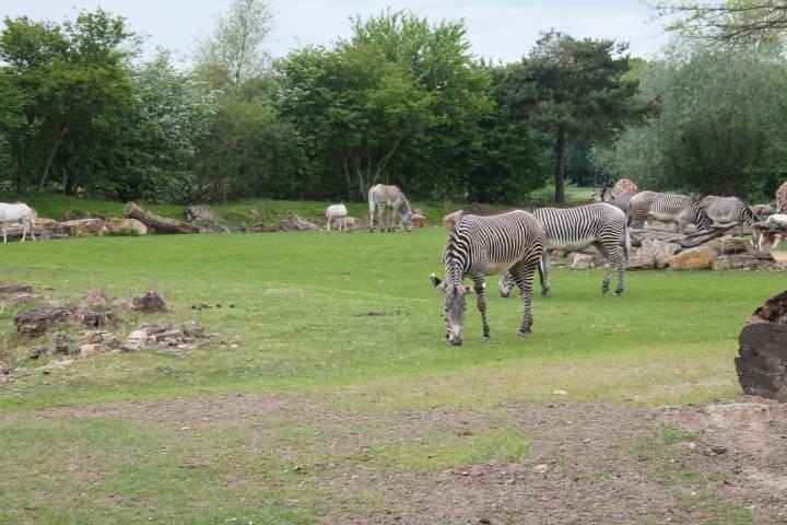 Зоопарк (нем. zoologischer garten) в лейпциге. фото