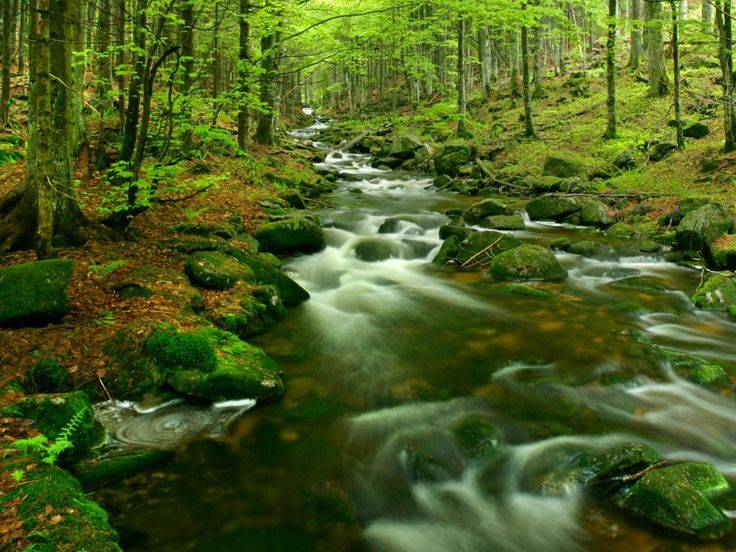 «путь по верхушкам деревьев» («baumwipfelpfad») в национальном парке баварский лес (nationalpark bayerischer wald) - munchenguide