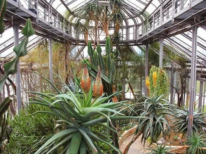 Самые красивые ботанические сады мира: описание и видео обзор