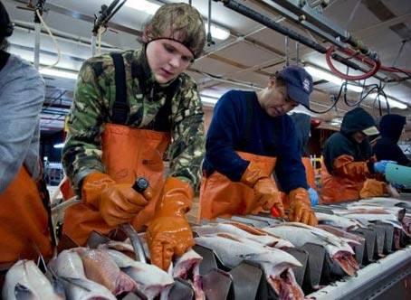 Работа и вакансии на аляске для русских, белорусов и украинцев в 2020 году