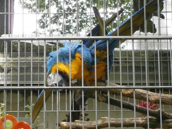 Франкфуртский зоопарк мирового уровня: zoologischer garten frankfurt