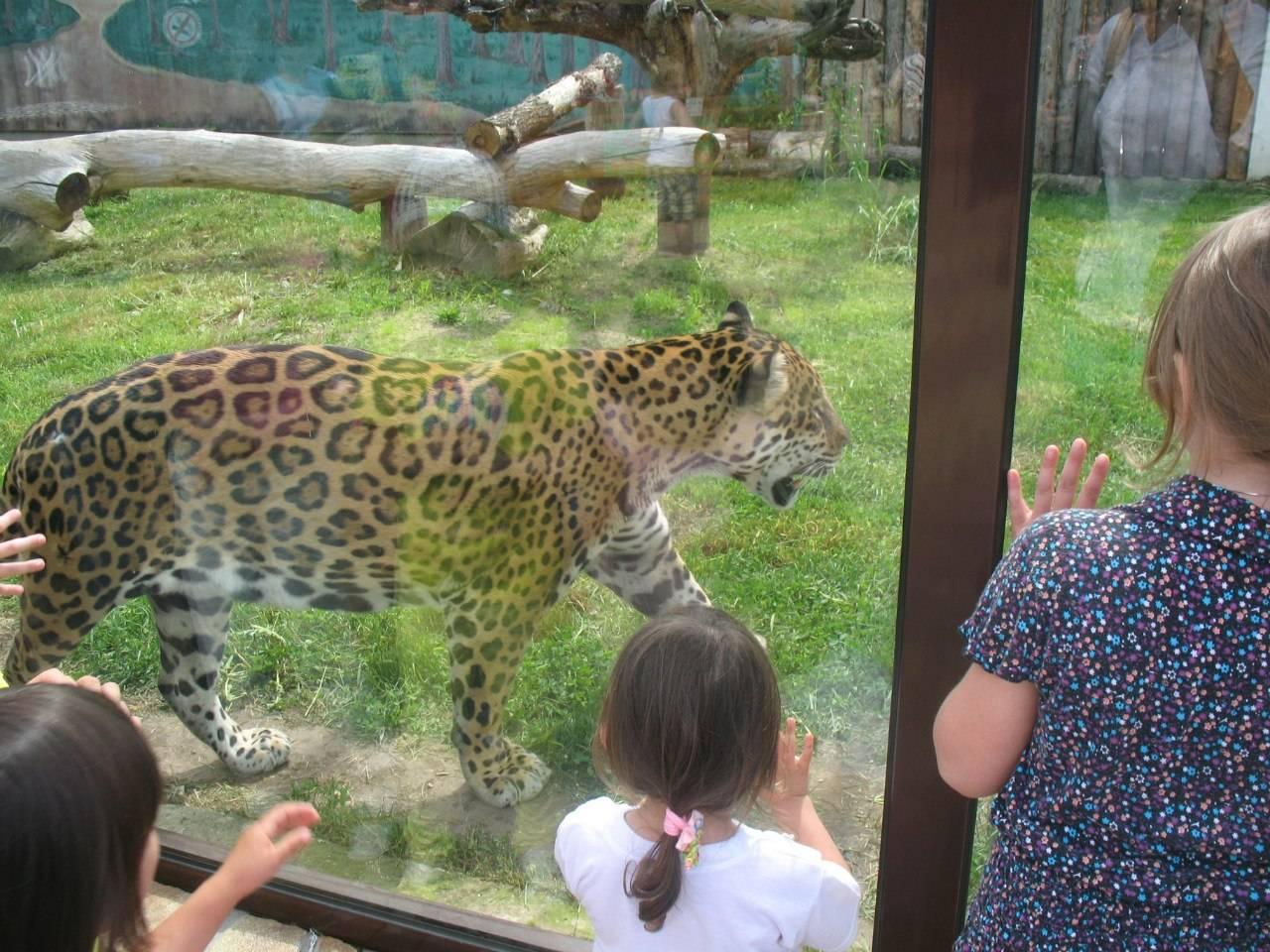Минский зоопарк. фото, видео, официальный сайт, цены на билеты 2021, режим работы, отзывы, как добраться — туристер.ру